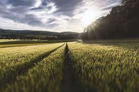 Agriculture impact on the environment