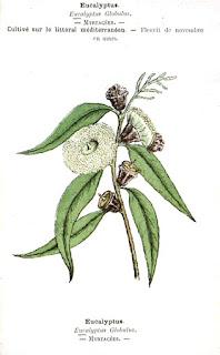 Maux de tête traiter au menthe poivrée, eucalyptus
