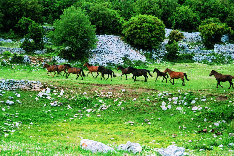 Άγρια άλογα Ξάνθη