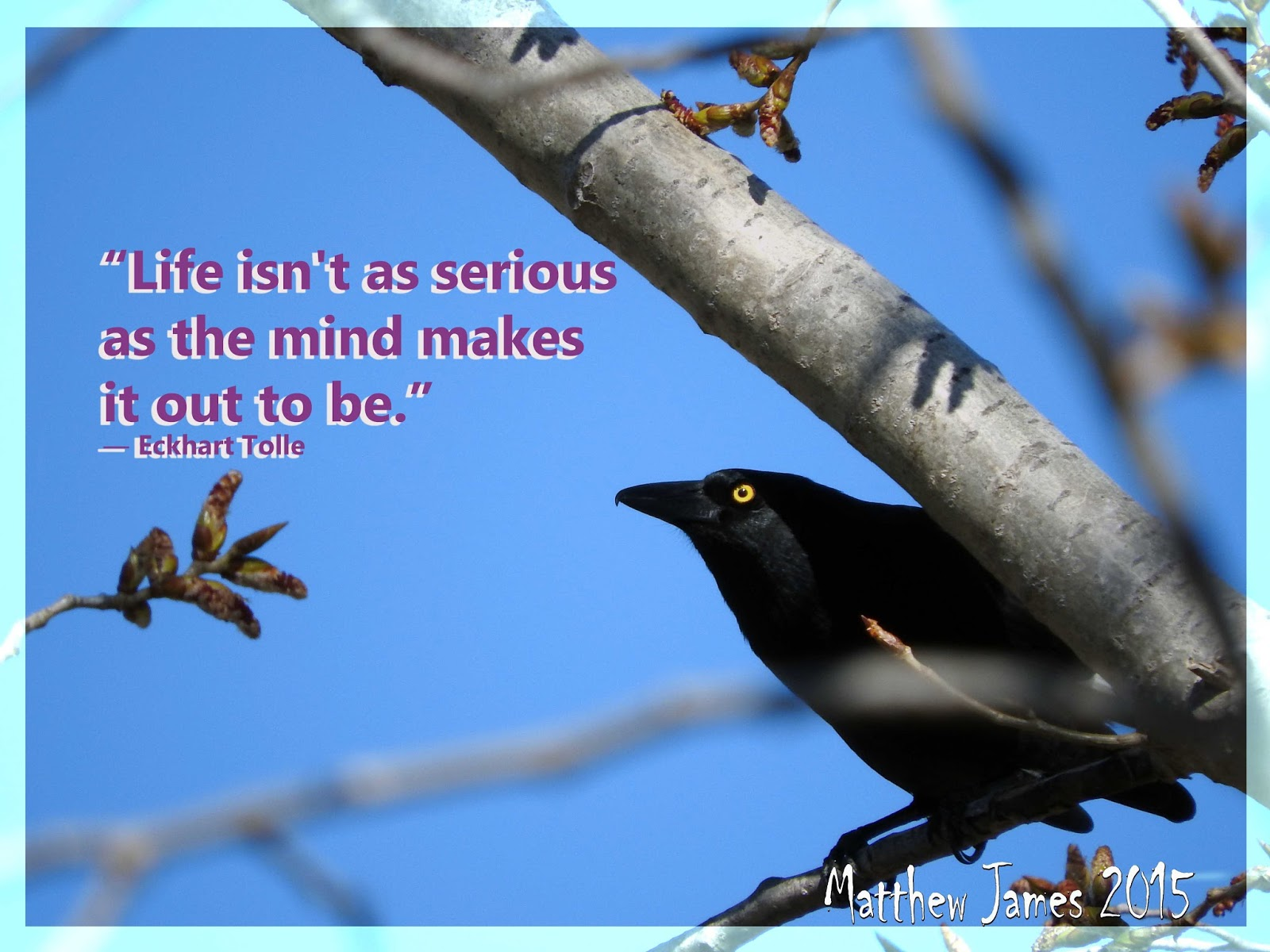 Calendar Mysteries May Magic : A light in the darkness life isn t as serious