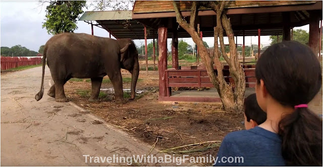 Not riding the elephants in Southeast Asia