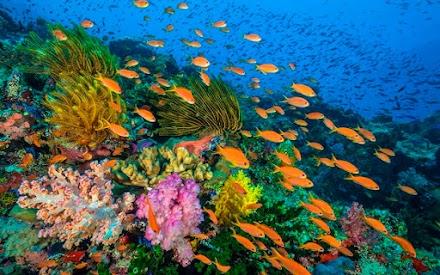 Οι 16 λόγοι που μας κάνουν να αγαπάμε αλλά και να σεβόμαστε τους ωκεανούς