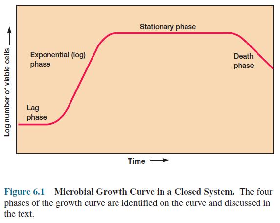 Microbial Growth Curve