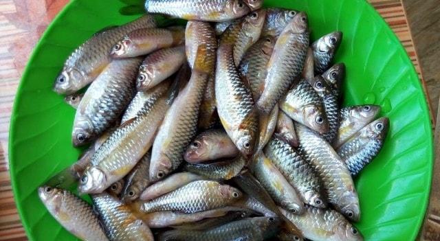 hasil mancing ikan beunteur