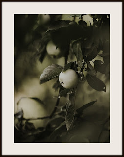 plakat jabłoń, plakat jabłko, plakat A3, plakat pionowy A3