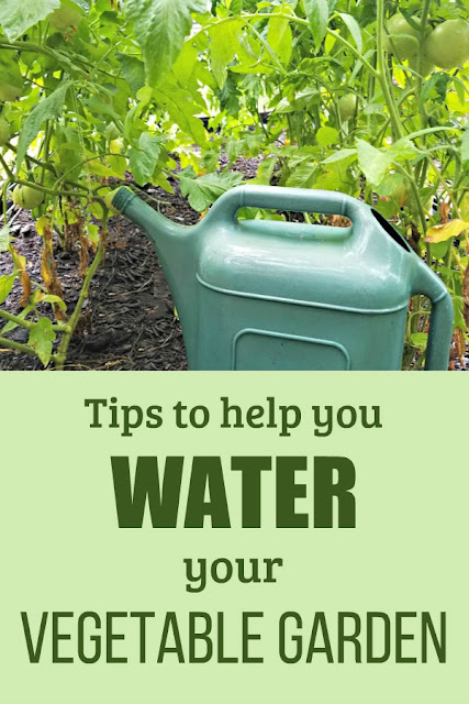 Do you struggle to keep your vegetable garden watered? Learn how much water your garden needs, and use these tips to make it easier.