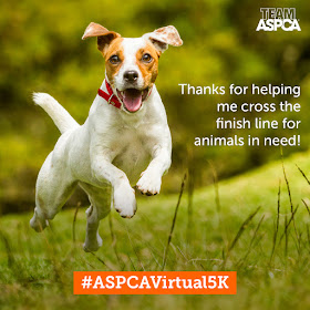 ASPCA Virtual 5K animals rescue