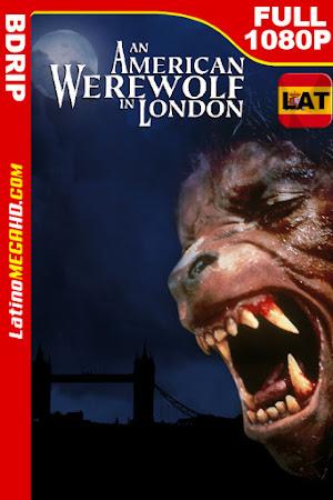 Un hombre lobo americano en Londres (1981) Latino HD BDRIP 1080P ()