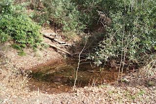 Ein kleiner Tümpel hat sich auf dem Waldboden angesammelt