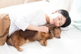 cão dormindo com o dono