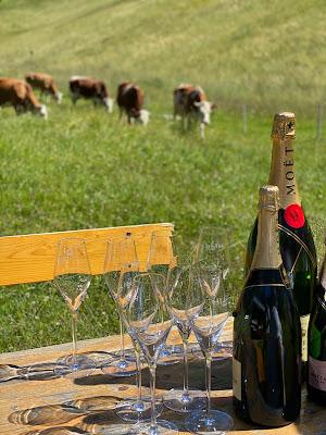 Kühe und Champagner, Berghochzeit im Zillertal