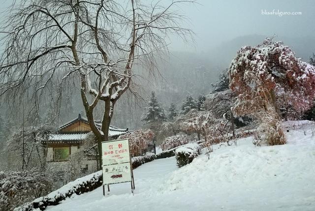 The Garden Of Morning Calm South Korea