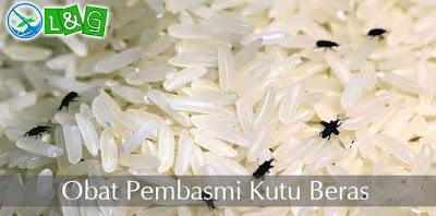 obat pembasmi kutu beras