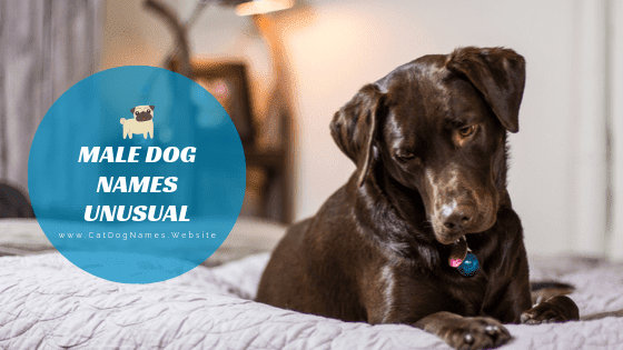Male Dog Names Unusual: Great Ideas For Boy Dog Name List 2020