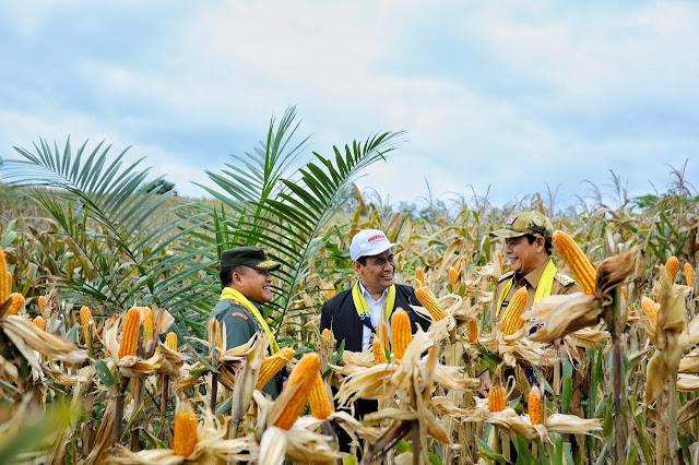 Menteri Pertanian Panen Jagung di Kalsel, Estafet Panen Raya di Nusantara Penuhi Kebutuhan Jagung Nasional
