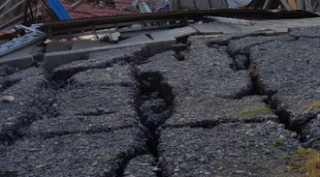 Kuau Mampu Mendeteksi Gempa Bumi