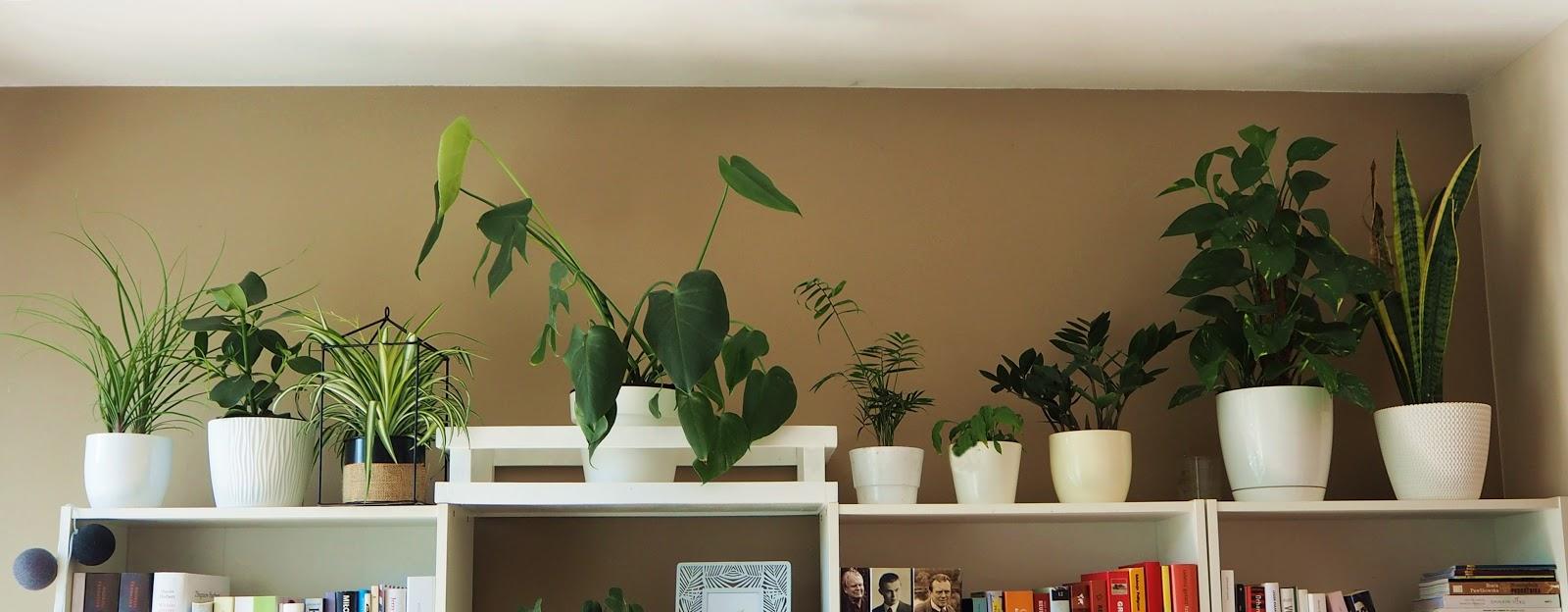 jakie rośliny do domu