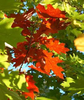 """Képtalálat a következőre: """"ősz hedifarkas"""""""