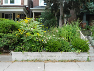 Koreatown Toronto Summer Garden Cleanup Before by Paul Jung Gardening Services--a Toronto Organic Gardening Company