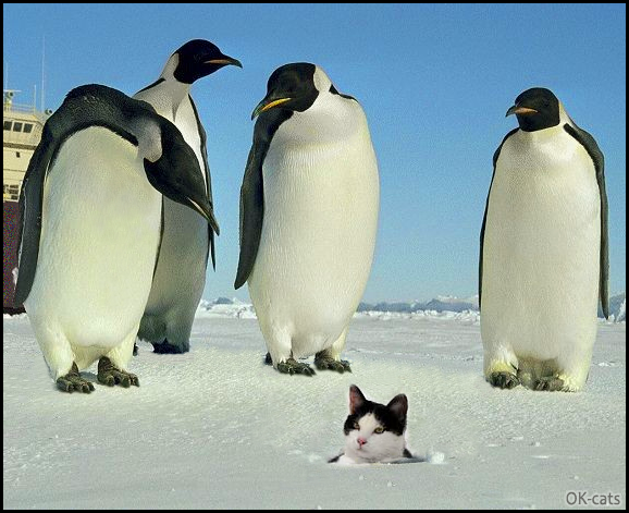 "Photoshopped Cat picture • Cat lost under the ice floe among penguins. ""What are you doing here weird animal?"""