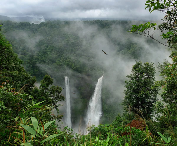 Tropical rain forest in Southern Laos
