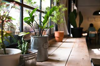 Jardinagem - Decoração - Casa - Apartamento