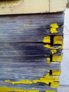 Μεταφορά μελισσιού από παλαιά κυψέλη σε νέα