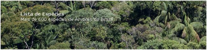 Como recuperar a mata ciliar  mais de 600 espécies de arvores do brasil