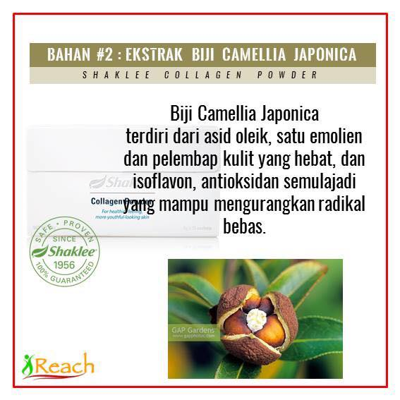 Info Collagen Powder Shaklee