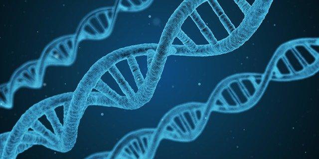 DNA क्या है - DNA  की रोचक जानकारी