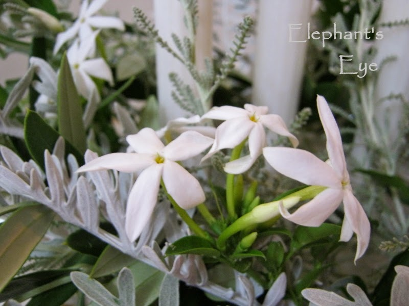 Silver and white jasmine flowers for 2012 Advent wreath