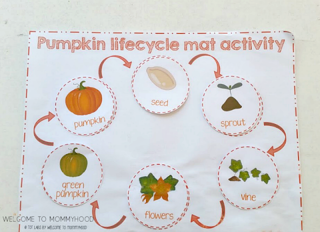 graphic relating to Life Cycle of a Pumpkin Printable titled Pumpkin daily life cycle printables for arms upon Thanksgiving