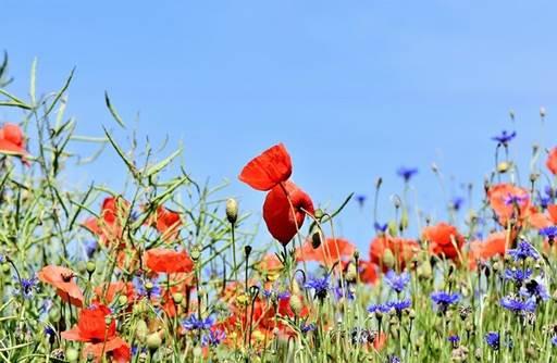 Puisi Tentang Bunga yang Kadang Memesona dan Melukai
