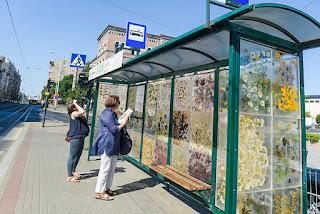 36 прозрачни панела от смола, които улавят цветята