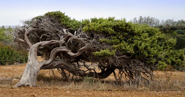 Pohon Tertiup Angin