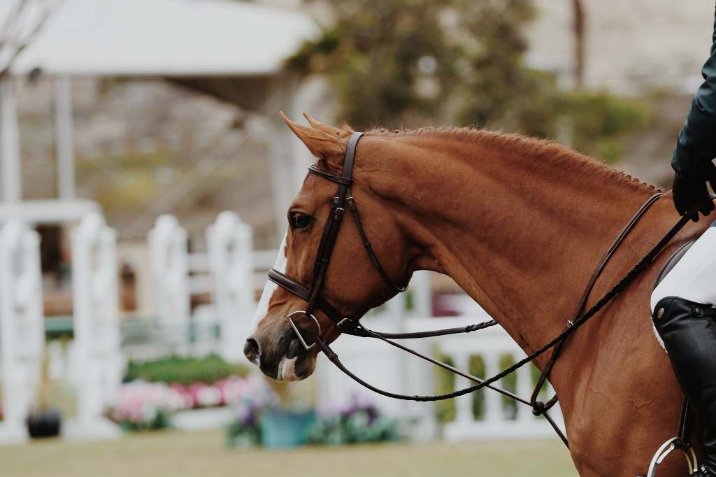 Best Horse Training Equipment - Review & Buying Guide