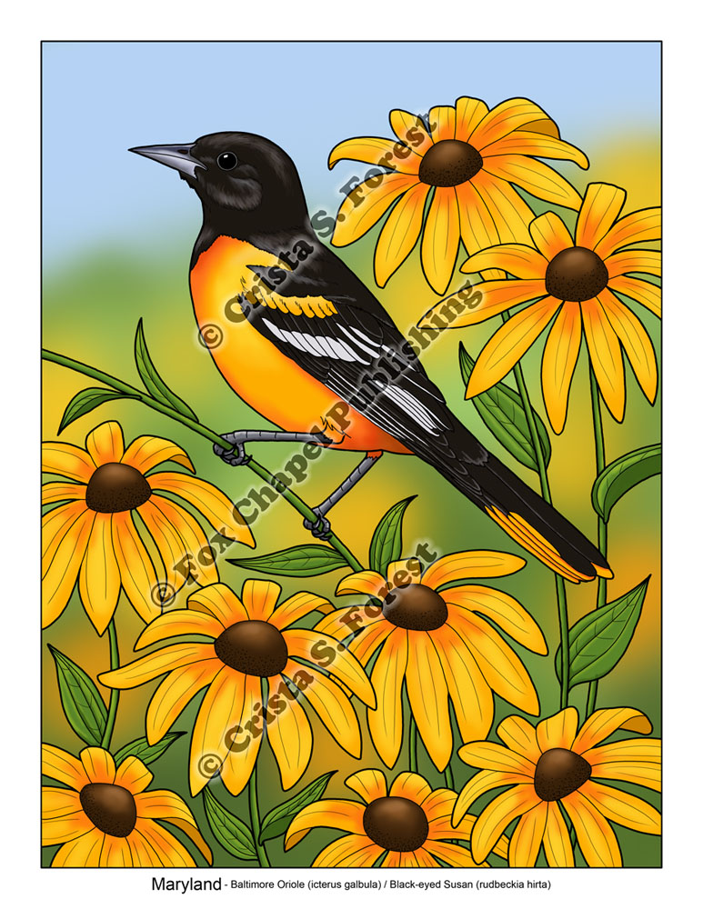 Here I Have Colored In Marylands State Bird And Flower The Baltimore Oriole Black Eyed Susan Such A Striking With Its Glowing Orange Against