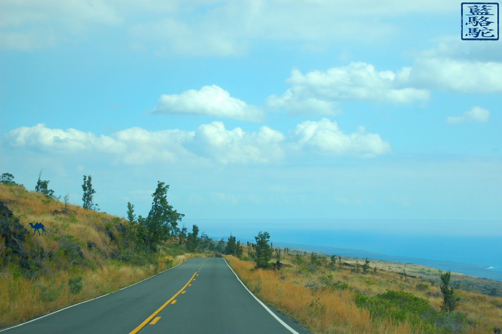 Le Chameau Bleu - Instantanés Hawaïens - route d'Hawaii