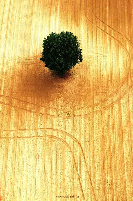 dessin de la terre avec son arbre seul