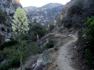Traveling north on Fish Canyon Trail, Angeles National Forest