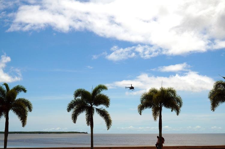 palm trees, Cairns, Australia, Euriental