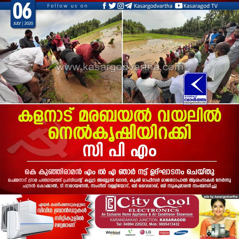 Kerala, News, Kalanad, Cpm, Kunjiraman mla, maravayal field, Cpm started agriculture