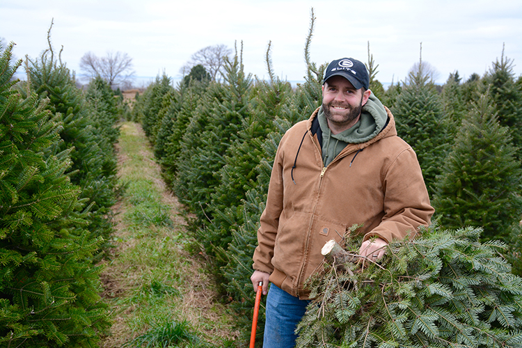 Christmas Tree Hunting | My Darling Days