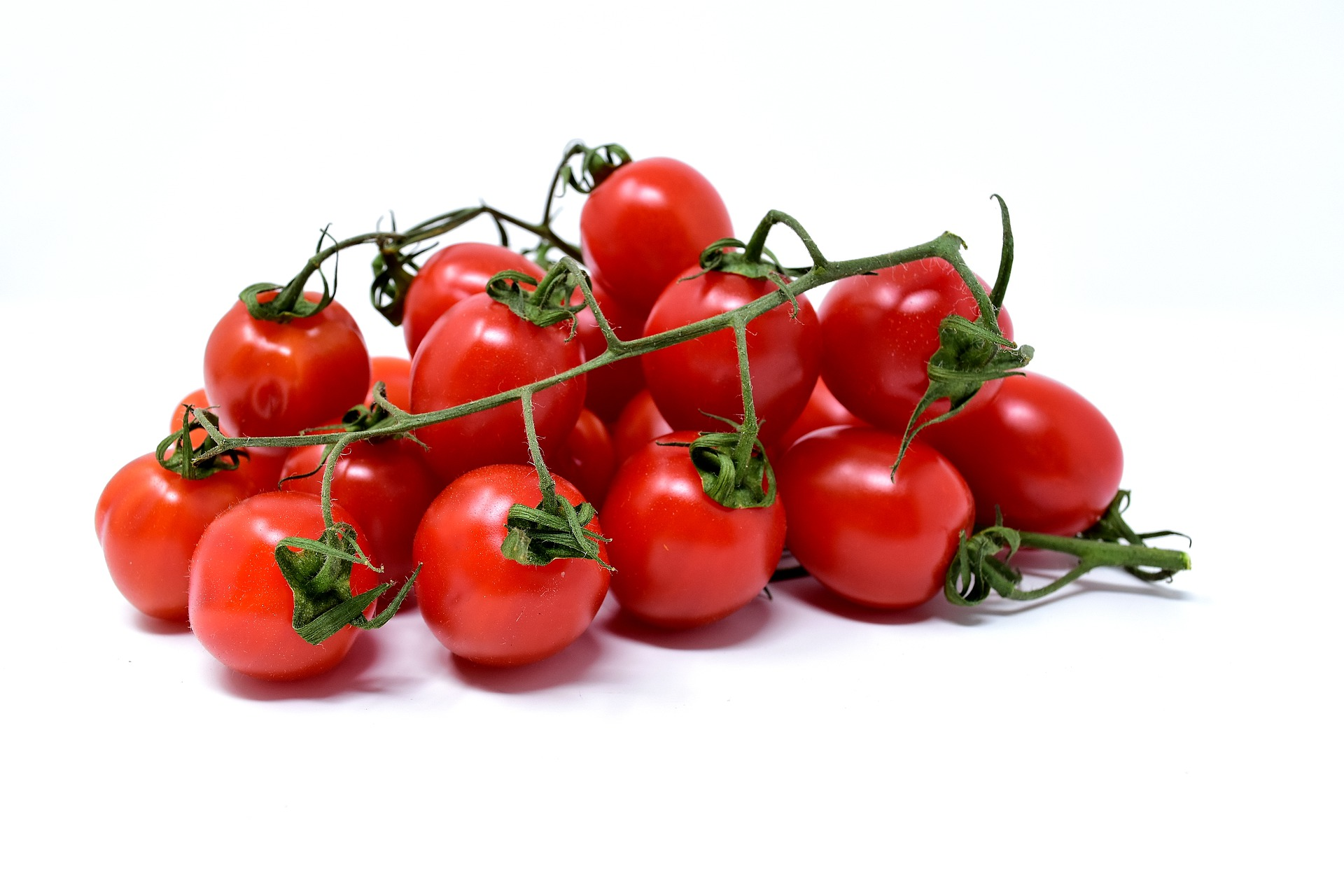 Tomatoes are a juglone sensitive crop