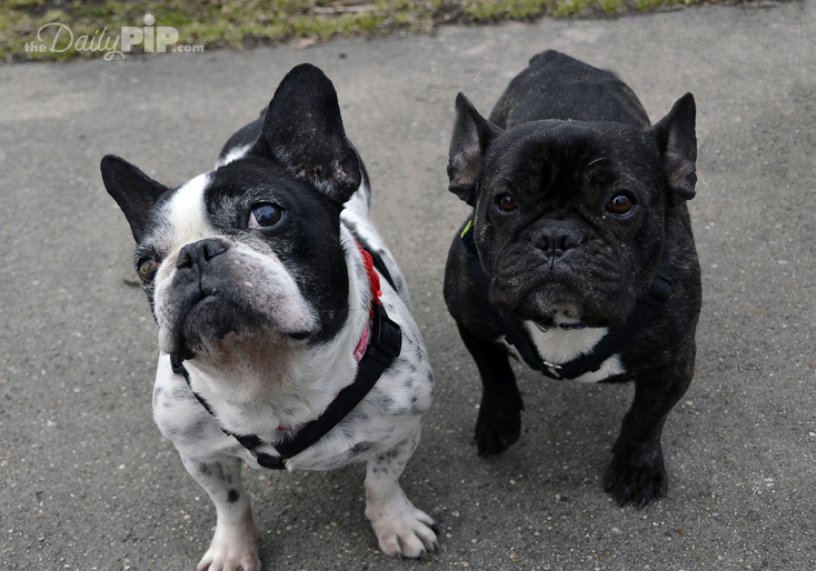 Rescue and adopt puppy mill survivors in honor of Adopt A Shelter Dog Month