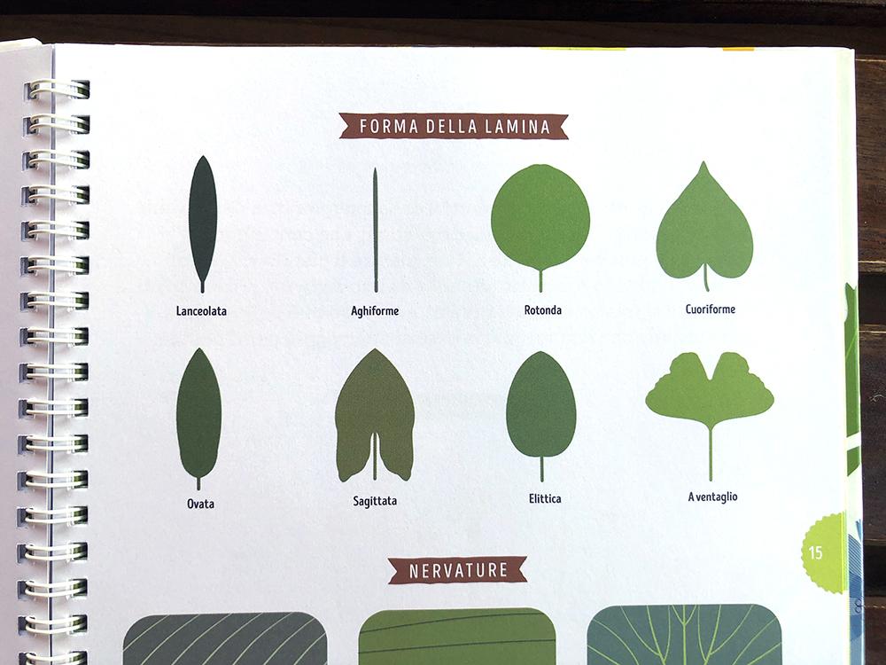 Tra foglie e fogli