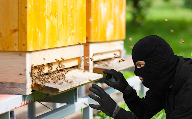 Κλοπή μελισσιών στην Πεντέλη