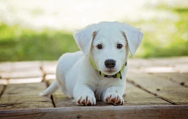 About Dog In Hindi - कुत्ते के बारे में जानकारी