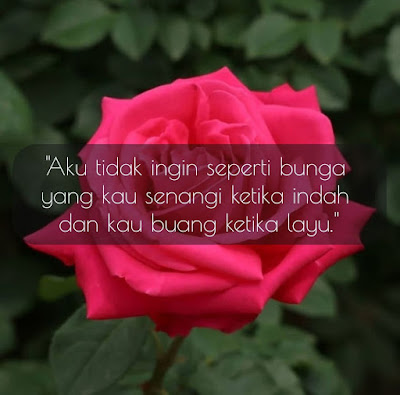 Quote Bunga Mekar