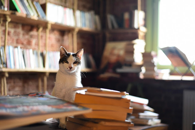 How to submit your book to The Writer's Pet, illustrated by a bookstore cat